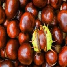 Extracto de Castaño de Indias, Hidrosoluble