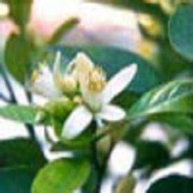 Aceite Esencial de Neroli- 100% Puro y Natural