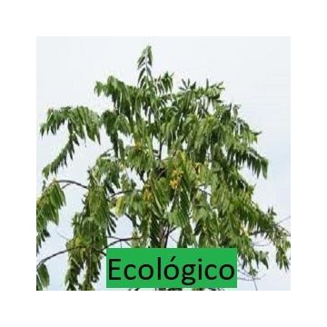 Aceite Esencial de Ylang Ylang III Bio