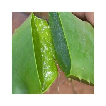 Aloe Vera Gel Ecologico